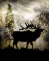 Mystic Elk Fine-Art Print