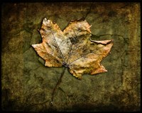 Metallic Leaf 1 Fine-Art Print