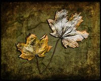 Metallic Leaf 2 Fine-Art Print