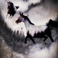 Black Mare - Dream 3 Fine-Art Print