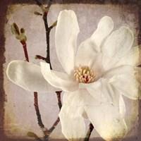 Paper Magnolia Closeup Fine-Art Print
