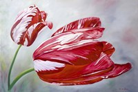 English Tulips Fine-Art Print