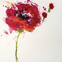 Poppy Master on White Fine-Art Print
