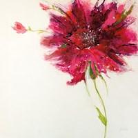 Pink Daisy on White Fine-Art Print