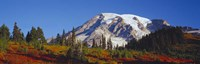 Mt. Rainier and Fall Color, WA Fine-Art Print