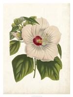 Striking Hibiscus Fine-Art Print