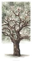 Oak Tree Composition II Fine-Art Print