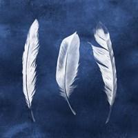 Cyanotype Feathers II Fine-Art Print