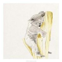 Baby Koala I Fine-Art Print
