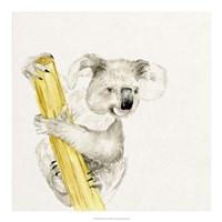 Baby Koala II Fine-Art Print