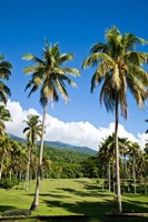 Golf course, Taveuni Estates, Taveuni, Fiji Fine-Art Print