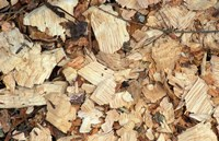 Wood Chips on a TPL Property, Goshen, Connecticut Fine-Art Print
