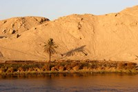Palm Tree on the Bank of the Nile River, Egypt Fine-Art Print