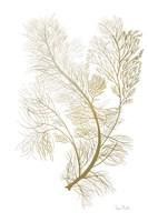 Fern Algae Gold on White 2 Fine-Art Print