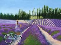 Picking Lavender Fine-Art Print