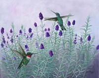 Humming Lavender Fine-Art Print