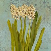 Hyacinth on Teal II Fine-Art Print