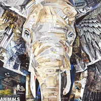 Elephants Gaze Fine-Art Print