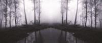 Forest mist Fine-Art Print