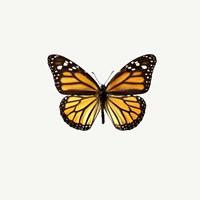Yellow Butterfly 1 Fine-Art Print