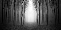 Dark Woods Fine-Art Print