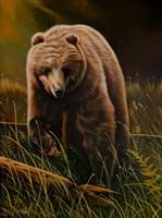 Brown Bear Fine-Art Print