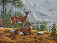 Buck Country 1 Fine-Art Print