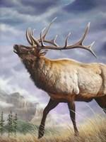 High Country Fine-Art Print