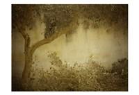 Olive Tree Fine-Art Print