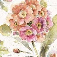 Country Bloom VI Framed Print