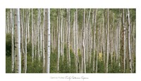 Early Autumn Aspens Fine-Art Print