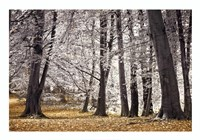 Autumn Trees And Leaves Fine-Art Print