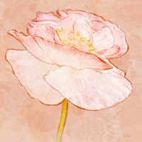 Sweet Peach Poppy I Fine-Art Print