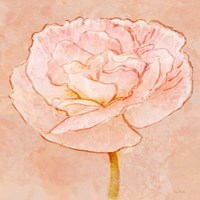 Sweet Peach Poppy II Fine-Art Print