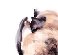 Sleepy Siamese Fine-Art Print