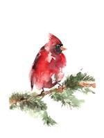 Cardinal on Branch Fine-Art Print
