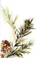 Pine Leaves Fine-Art Print