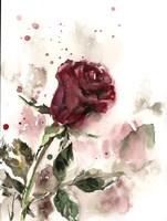 Single Rose Fine-Art Print