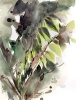 Botanicals Fine-Art Print
