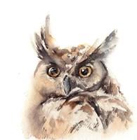 Owl Fine-Art Print
