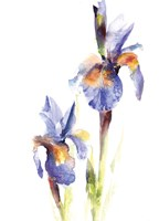 Iris III Framed Print