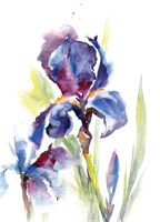 Iris IV Framed Print