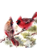 Cardinals II Framed Print