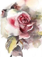 A Rose is Still a Rose Fine-Art Print