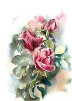 Classic Roses II Framed Print