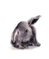 Portrait of a Rabbit Framed Print