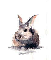 Portrait of a Rabbit II Framed Print