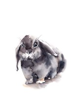 Portrait of a Rabbit V Framed Print