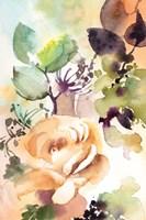 Rosy Rose II Framed Print