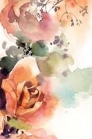 Rosy Rose III Framed Print